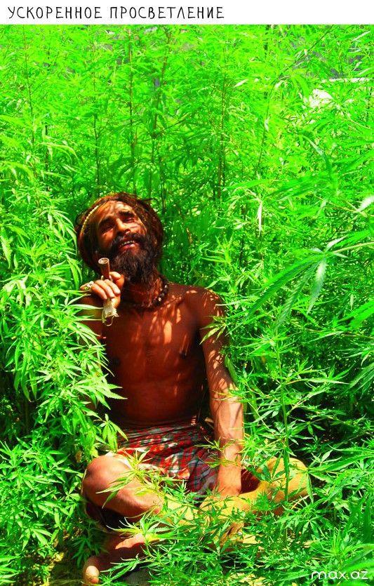 Приколы картинки марихуана, идеи для открыток
