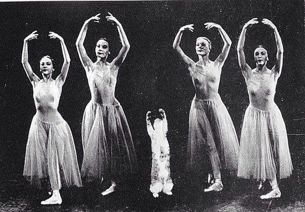 Mourka, le chat du chorégraphe George Balanchine, participant à la répétition d'un ballet