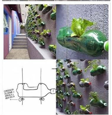 Plastic Bottle Plant Wall