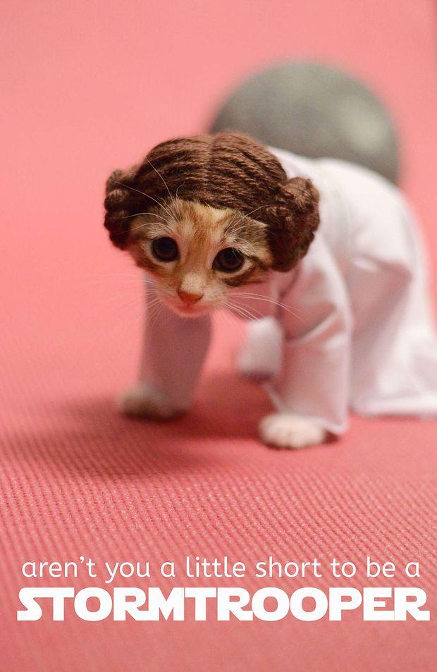 Kittie Lovers - Star Wars