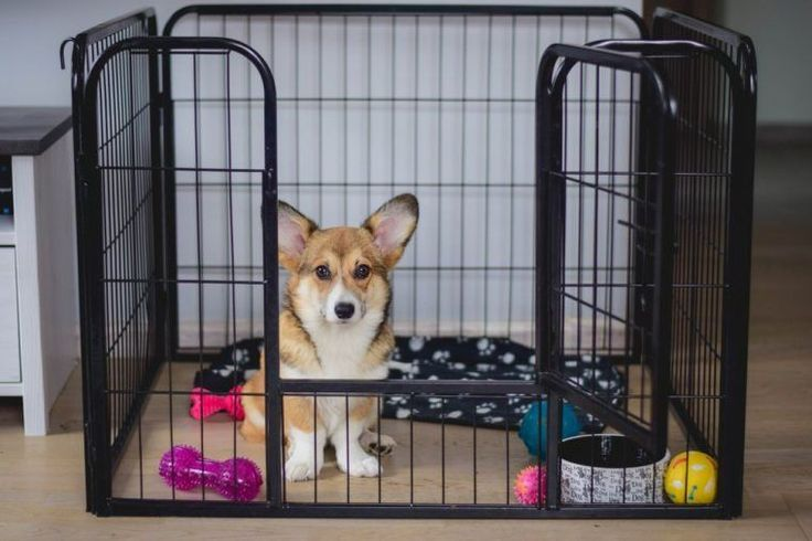 Dog Breed Selector And Puppy Finder Choosing A Dog You Can Find Out More Guide At The Link In 2020 Crate Training Puppy Crate Training Puppy Schedule Puppy Crate