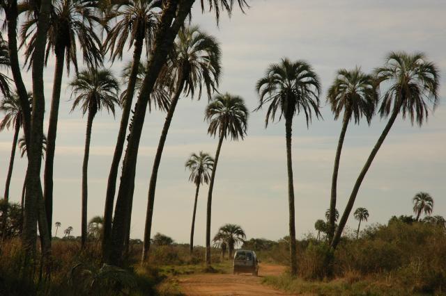 Parque Nacional El Palmar Entre Rios