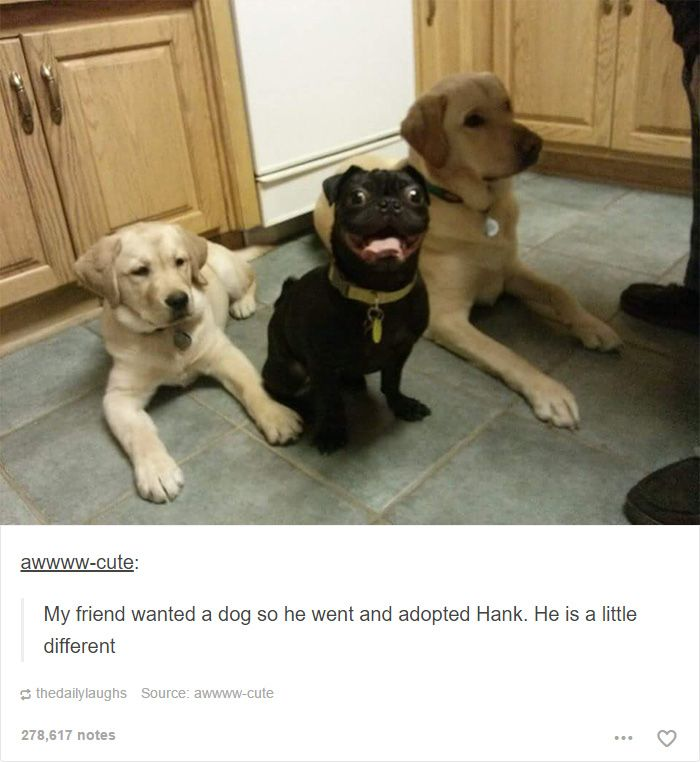 Best Funny Dog Stuff Images On Pinterest Animal Pictures - 45 tumblr posts about animals that are impossible not to laugh at