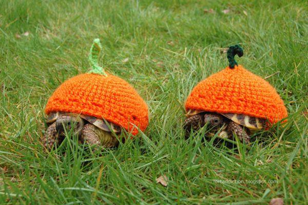 Dwa żółwie w dyniowych sweterkach.
