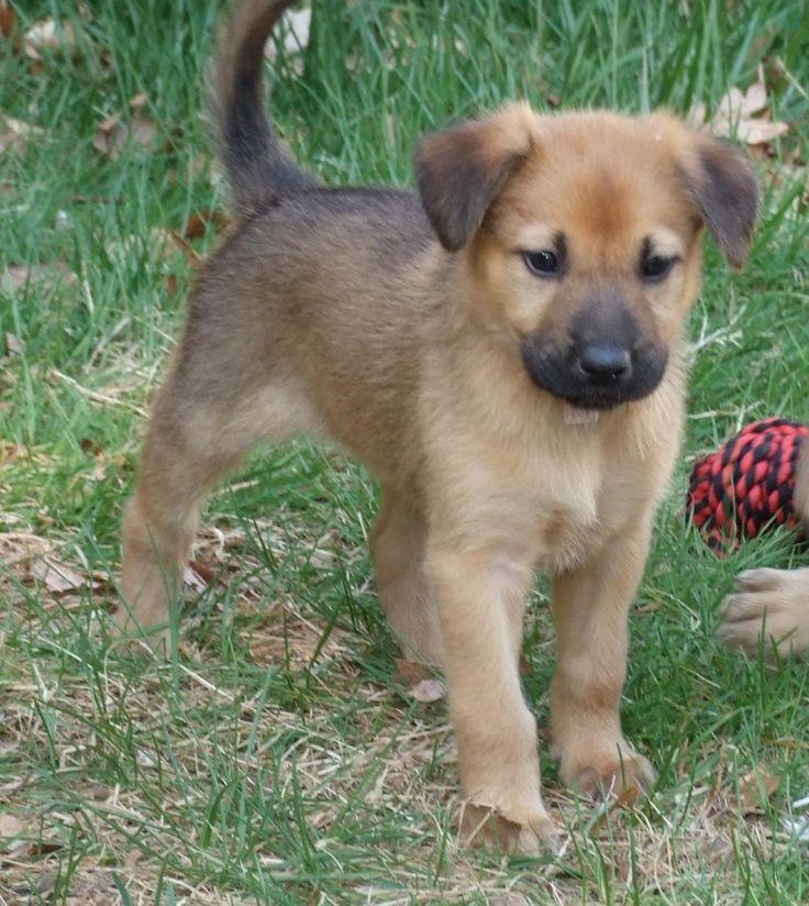 Small Dog Breed Looks Like Rottweiler