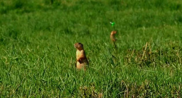 Insane 120-Yard Bomb Bow Shots on Prairie Dogs