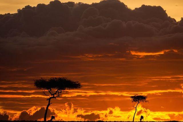 fotógrafo, Paul Goldstein, no Masai Mara, uma reserva nacional no Quénia