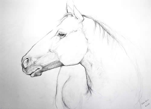 Pencil Drawings Of Horses Heads Pencil Drawings Horse Heads Pic