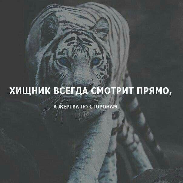Картинки путина, картинки с тиграми с надписью про жизнь