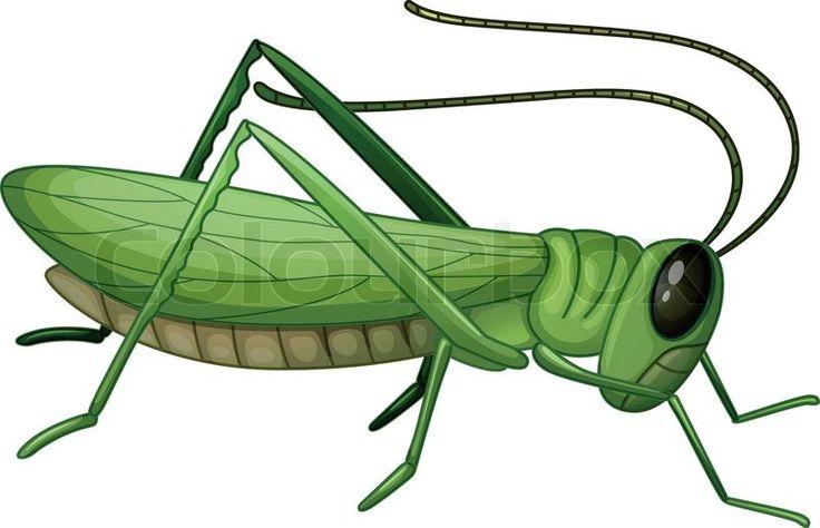 """grasshopper picture for kindergarten - """"Google"""" paieška"""