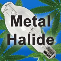Metal Halide grow lights are suitable for the vegetative stage of cannabis growth