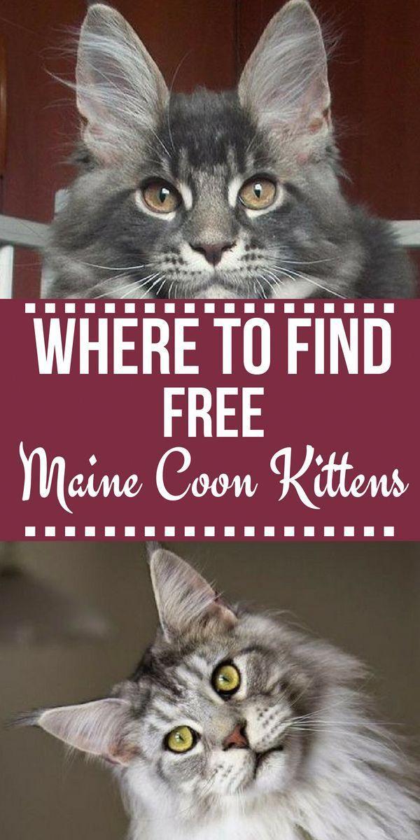 Cats Craigslist Docatscry Whatcatscaneat Fur Babies Pet Adoption What Cats Can Eat Cats