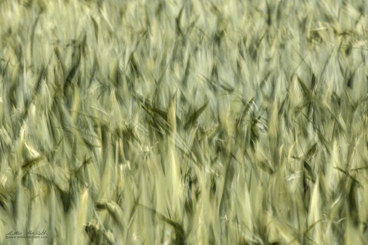 windy - Copyright © Milko Marchetti   <p>Website www.milkomarchetti.com</p>