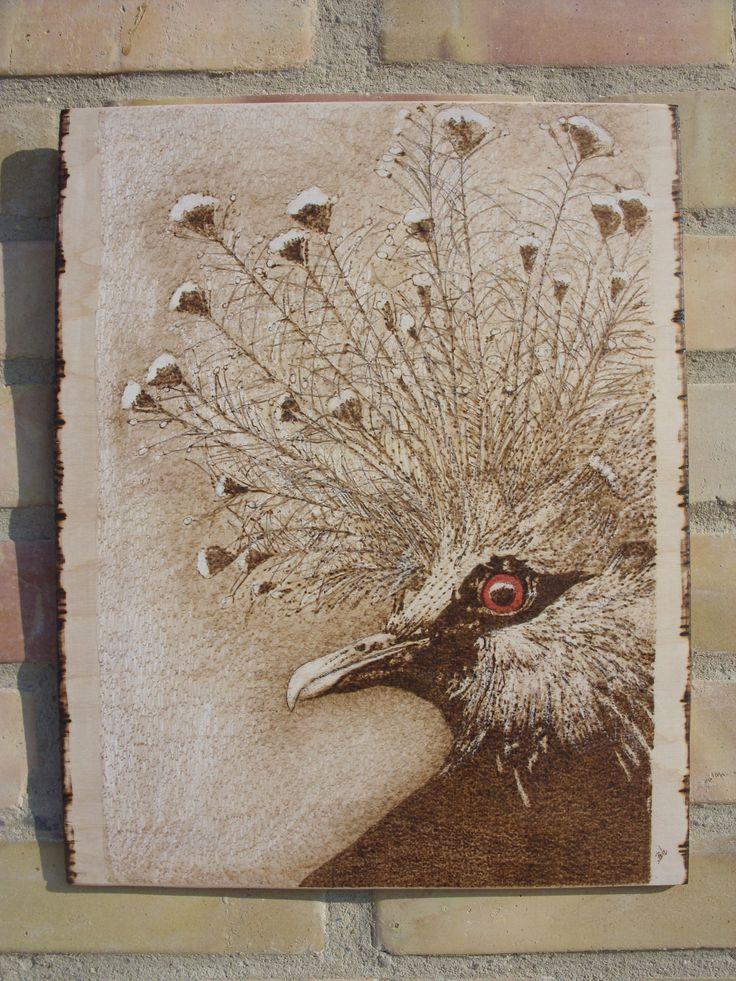 a galambok királynője Viktoria koronás galamb - kézzel égetett, pirográf kép (pyrography art)