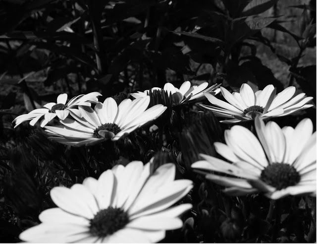 Migawka: czarno-biało