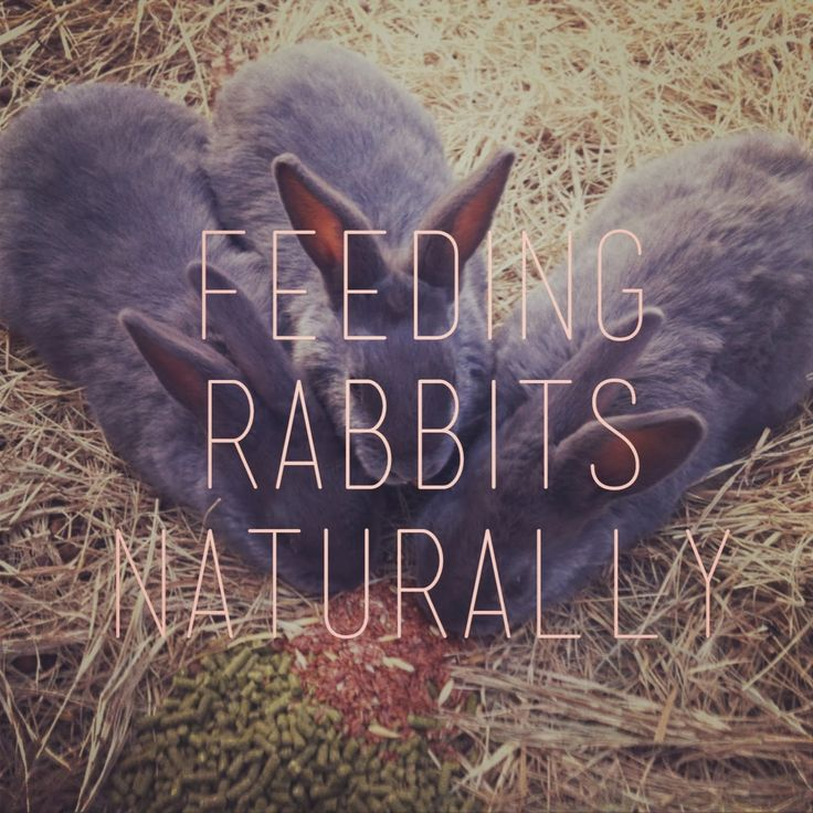 Feeding Rabbits Organically and Naturally on a Pasture-based System - American heritage breed meat rabbits