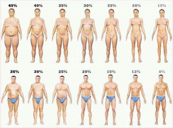 Se você está lutando para perder peso, sabe que precisa pesquisar para ter boas informações que vão ajudá-lo nesse objetivo.