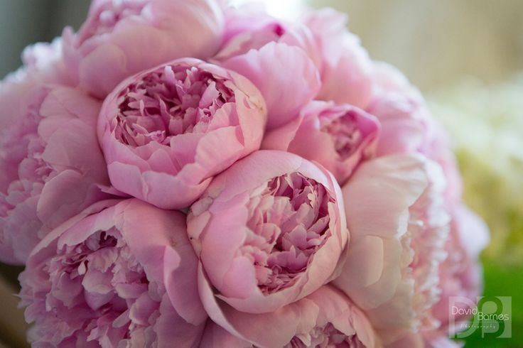 Bridal bouquet of pink peonies at the Fairmont Copley Plaza, Boston, MA. www.davidbarnesphotography.com