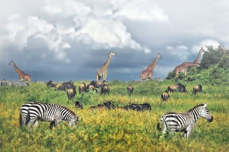 Serengeti National Park. East Africa Photo by Nora de Angelli - www.noraphotos.com -- National Geographic Your Shot