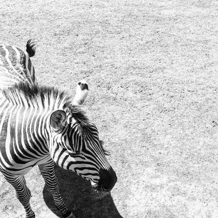 Timeout in Zoodoo Zoo, Tasmania