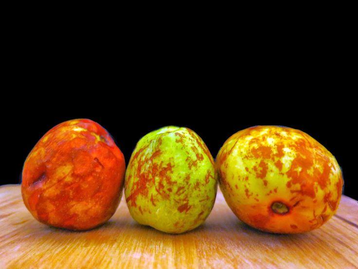 fun fruit facts buy exotic fruits