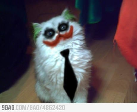 Meow so serious?