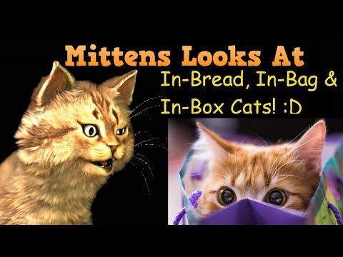 Mittens Looks at In-Bread, In-Bag and In-Box Cats.