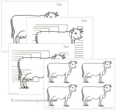 Elementary Cow Nomenclature: includes 30 parts of a cow, includes blackline masters