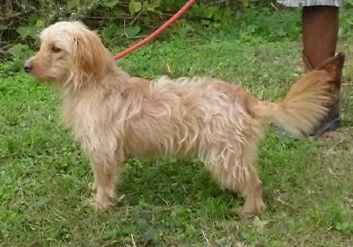 Pics Of Adoptable Dogs At Polk Spca