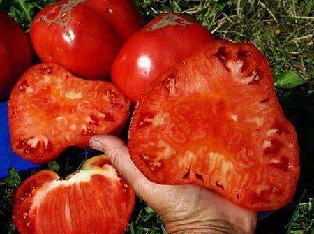 Бражка для урожая помидор.. Обсуждение на LiveInternet - Российский Сервис Онлайн-Дневников