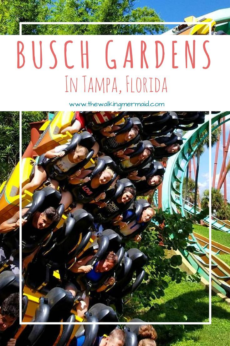 487f721b7ebfe61c3d9d7b37dcaef277 - Is Busch Gardens Open On Veterans Day