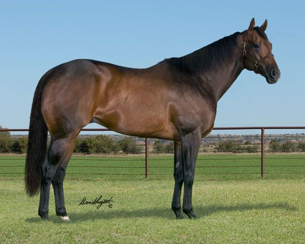 Jess Zoomin - Brown quarter horse racehorse stallion ... Brown Quarter Horse Stallion