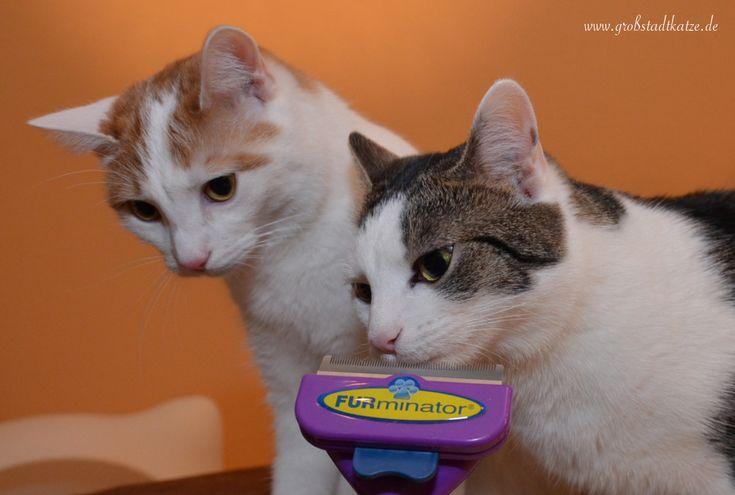 Der FURminator entfernt Katzenhaare direkt dort wo sie entstehen: An der Katze. ;) Die Haarentfernung bei der Katze ist schonen, schmerzfrei und effezient.