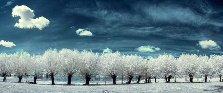Dirt road with willows in infrared  fotografaw