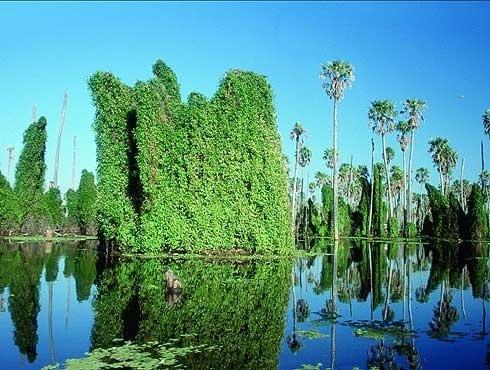 El bañado de la Estrella  Formosa - Argentina
