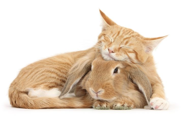 Грызуны зайцы кролики фото описание