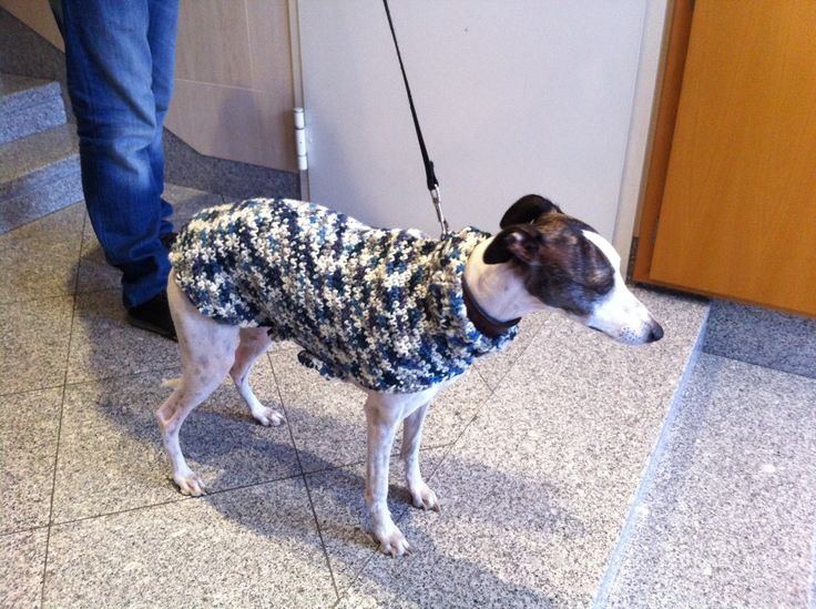 Melody got a new coat!! Can you imagine how happy she is? LOL... Now we can go outside, even if it's cold :)