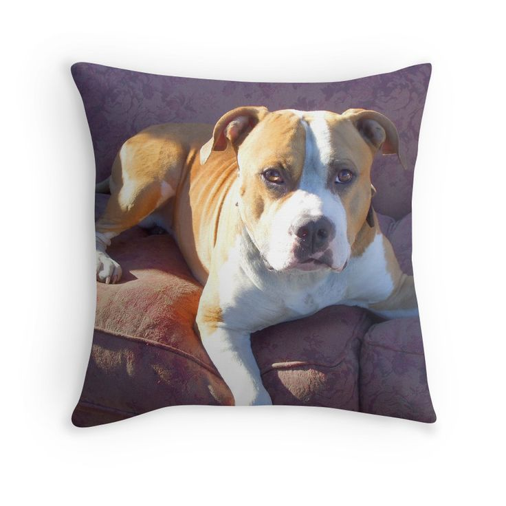 Throw Pillows Dogs : 17 Best images about Pillows for the Dog lover on Pinterest Chihuahuas, Boxer puppies and ...