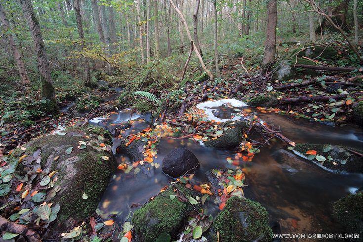 Soothing Creek by tobias hjorth