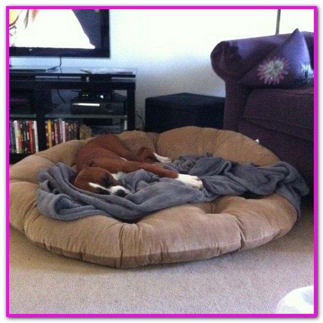 Orthopedic Dog Beds For Great Danes Orthopedic Dog Bed Dog Bed