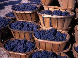 Blueberries blackberries Texa blueberry farm farms Pick your own Blueberry Plants for sale Blackberry Plants for sale, Pick 'n Edom Edom, TX Home