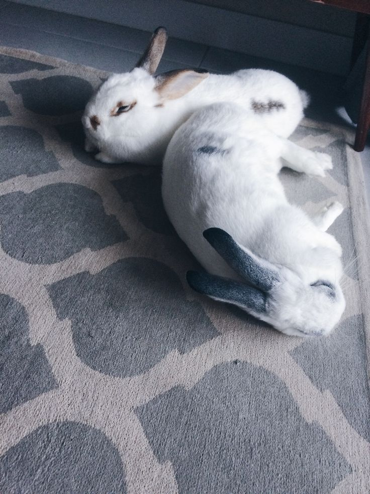 @apartmentbunnies on instagram