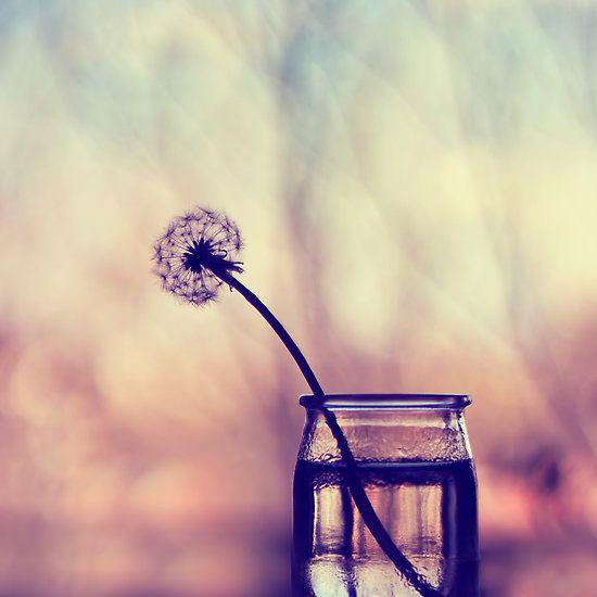 a year of dandelions - 2014 fine art calendar   $39.30    calendar, year, 2014, flower, flowers, photography, nature, dandelion, dandelions, water, raindrops, macro, pink, gold, purple, white, blue