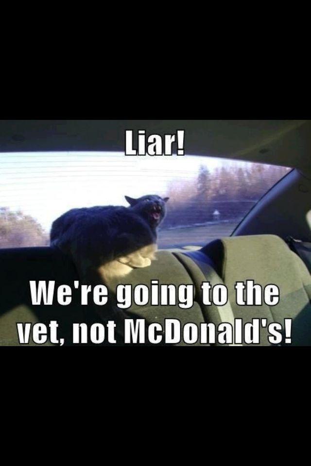 Liar! We're going to the vet, not McDonald's!