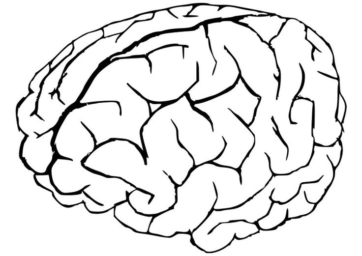 Human Brain Coloring Pages