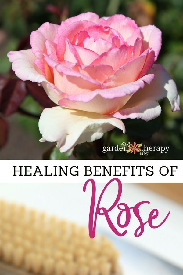 Healing Benefits Of Rose For Beauty Products Garden Therapy Natural Anti Inflammatory Diy Natural Beauty Recipes Natural Beauty Treatments