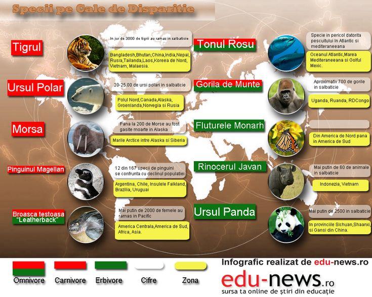 Peste 19.000 de specii de plante și 5.000 de specii de animale de pe Glob sunt clasificate ca fiind pe cale de dispariție.