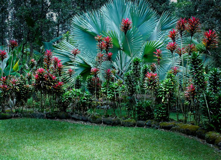 Hawaii landscape design tropical landscaping hawaiian for Tropical landscape