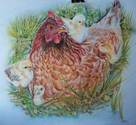 Gallina con pulcini gallina disegnata gallina di Stellangelo