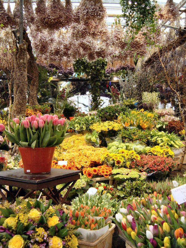 Flower Market Amsterdam  Netherlands